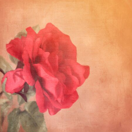art floral vintage background with one red rose Stock Photo - 21169794