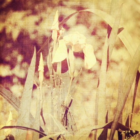 art floral vintage blur background with irises in sepia photo