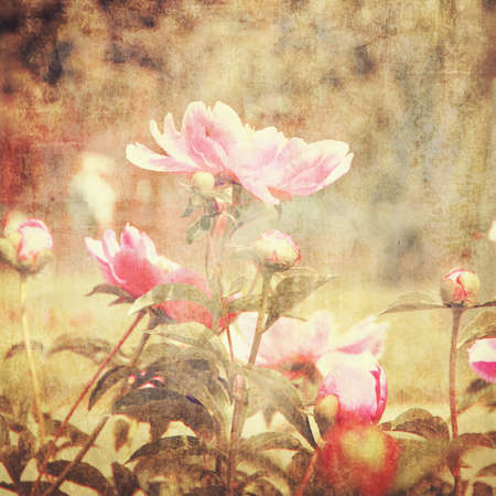 art floral vintage background with pink peonies Stock Photo - 21169818