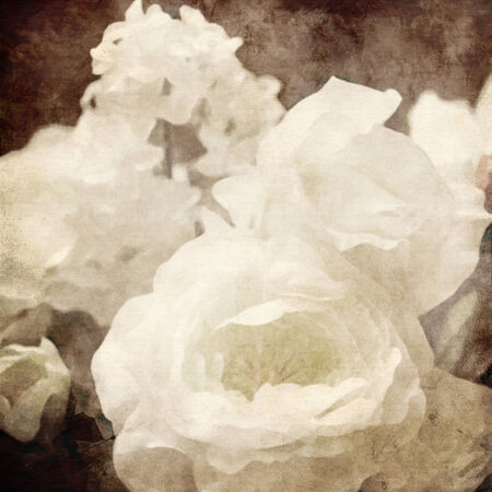 art floral vintage sepia background with white roses photo
