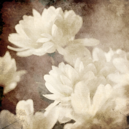 art floral vintage sepia background with white asters photo