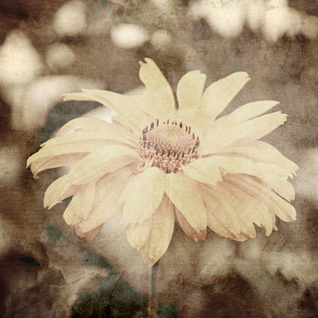 art floral vintage sepia background with light yellow chamomiles photo
