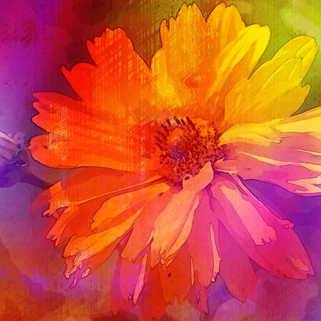 art floral vintage rainbow  background with asters photo