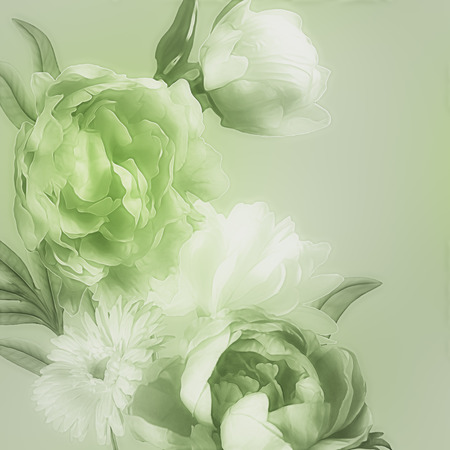 florish: art monochrome vintage watercolor blurred floral pattern with green and white peonies and gerbera isolated on light green background with space for text