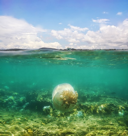 half fish: Beautiful jellyfish floating in the sea, and ship is floating on top