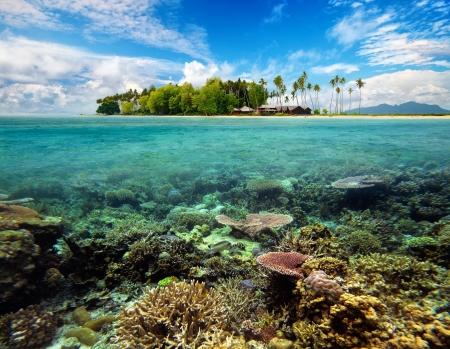 Krásný tropický ostrov Coral s bílým pískem, palmami, bungalovů, plavání ryb