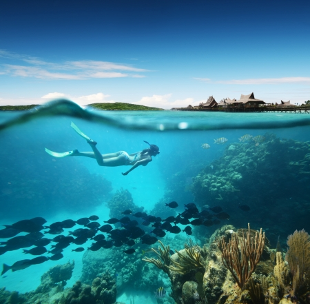 arrecife: Mujer joven snorkel en el arrecife de coral en el mar tropical Caribian