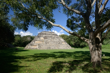 Big tree and pyramid in El Puente Archaeological Park in Honduras