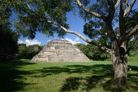 Velký strom a pyramida El Puente archeologického parku v Hondurasu Reklamní fotografie