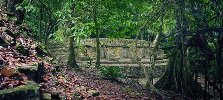 explores: Little study of archaeological structures in the jungle in the ancient Mayan city of Palenque, Mexico
