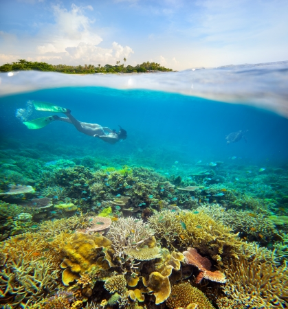 In search of underwater adventure on coral reef Stock Photo