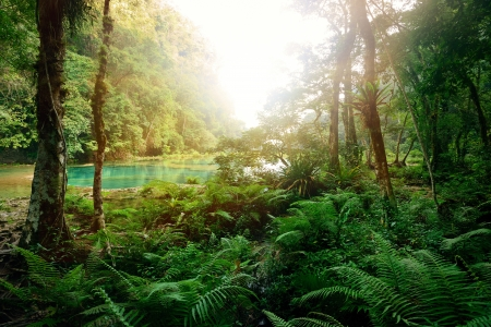 Mysterious Mayan jungle in the national park Semuc Champey Guatemala  photo
