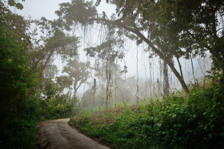Mysterious foggy road in the jungle of Guatemala at dawn
