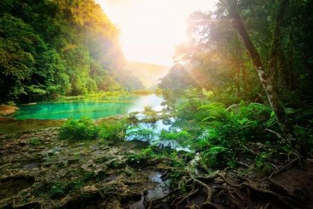 Slunečné ráno v hornatém džungli národního parku Semuc Champey Guatemala