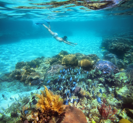 A woman snorkeling in the beautiful coral reef with lots of fish  photo