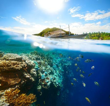 apo: Beautiful underwater world on a sunny day at Apo Island  Philippines Stock Photo