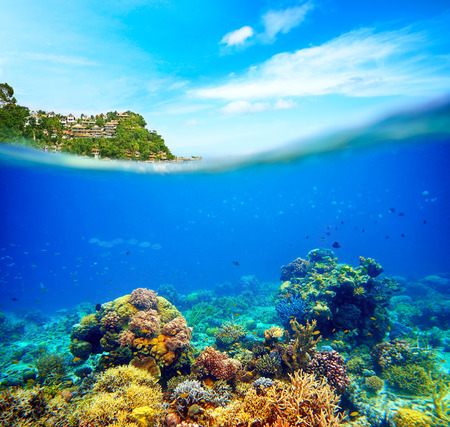 underwater life: Underwater scene near the island of Boracay  Coral reef, colorful fish and sunny sky shining through clean ocean water  Space underwater for you to fill or just use standalone  High res Stock Photo