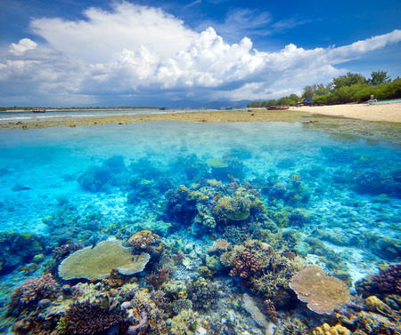 길리 트라의 아름다운 산호초 섬. 인도네시아