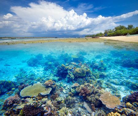 Krásné Coral Reef ostrov Gili Trawangan. Indonésie