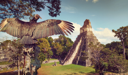 Neophron looking at the ancient ruins of the Mayan city of Tikal. Central America, Guatemala Stock Photo