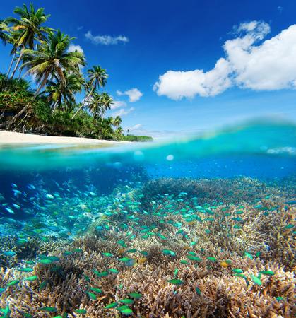 Récif de corail en mer tropicale sur un fond de l'île verte Banque d'images - 37052232