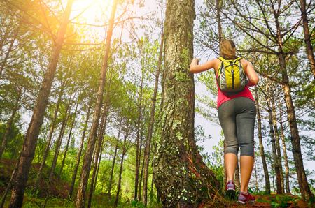 ecotourism: Woman watching pine forest.  Ecotourism concept image, with happy female hiker.