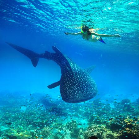 Mladá žena šnorchlování podvodní se dívá na velké žralok velryby. Filipíny