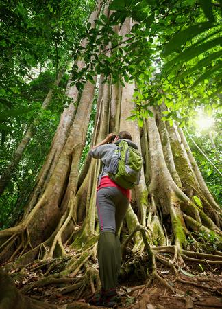 considers: Traveller looking through binoculars considers wild birds in the jungle.Bird watching tours Stock Photo