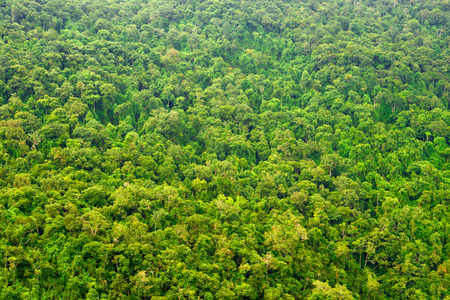 amazon rainforest: Beautiful vibrant background consisting of trees of the rain forest.