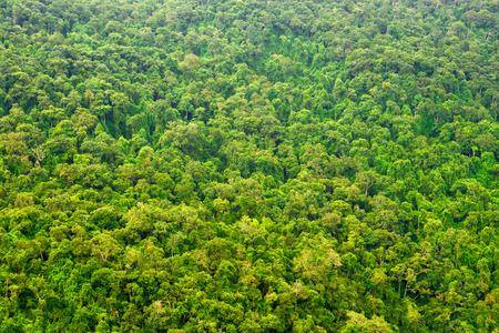 Mooie levendige achtergrond die bestaat uit bomen van het regenwoud.