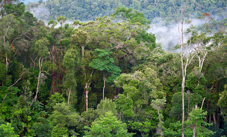 雨の後の熱帯林。 写真素材