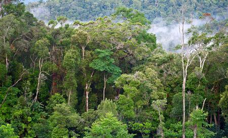Tropisch bos na regen. Stockfoto