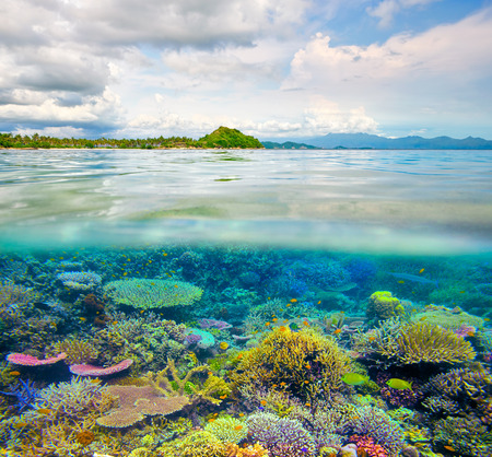 Coral reef in clear tropical waters in front of exotic island 스톡 콘텐츠