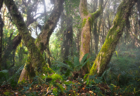 Landscape of the mysterious rain forest in the fog at dawn