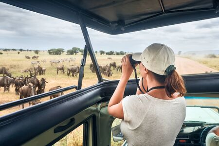 Woman tourist on safari in Africa, traveling by car with an open roof of Kenya and Tanzania, watching zebras and antelopes in the savannah. National park Serengeti