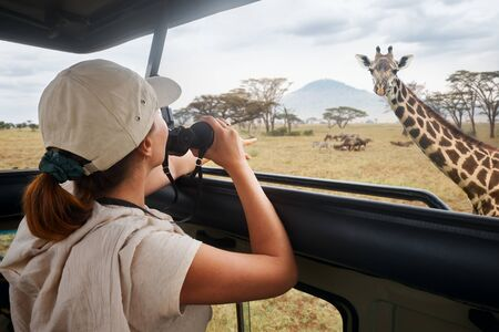 Woman tourist on safari in Africa, traveling by car with an open roof of Kenya and Tanzania, watching giraffes and antelopes in the savannah. National park Serengeti.