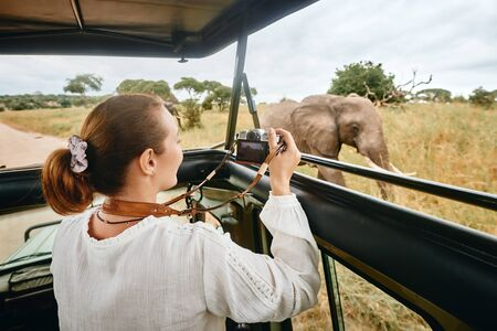 Woman tourist on safari in Africa, traveling by car with an open roof of Kenya and Tanzania, watching elephants in the savannah. Banco de Imagens