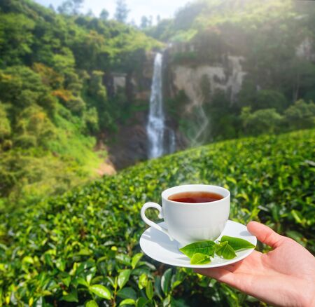 White cup with tea in hand on background of green tea plantation and mountain waterfall on Sri Lanka