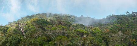 Panoramic view of rainforest high mountains in Horton National Park on Sri Lanka. Banco de Imagens