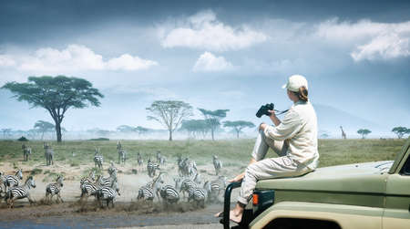Woman tourist on safari in Africa, traveling by car in Kenya and Tanzania, watching zebras and antelopes in the savannah. Adventure and wildlife exploration in Africa. Serengeti National Park. Banco de Imagens
