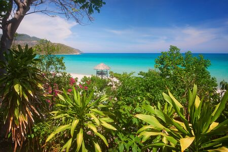Scenic summer view of the turquoise sea through the branches of tropical trees and flowers. Banco de Imagens