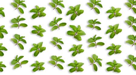 Fresh green mint on white background
