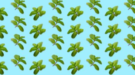 Fresh green mint on blue background. Banco de Imagens