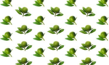Fresh green limes on branch with leaves Isolated on white background.