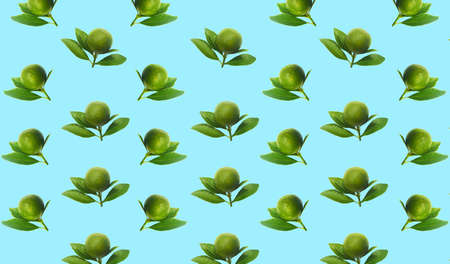 Fresh green limes on branch with leaves Isolated on color background.