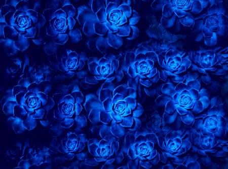 Beautiful magical glowing succulent flowers on dark blue background. Futuristic nature design illustration.