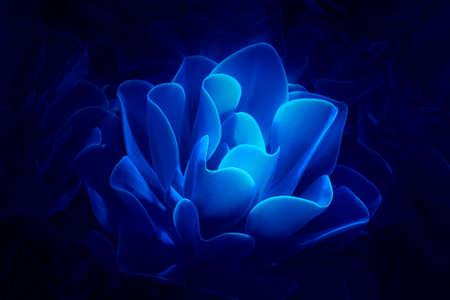Beautiful magical glowing succulent flower on dark blue background. Futuristic nature design illustration.