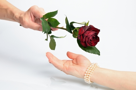 Man s hand gives a flower red rose for female hands photo