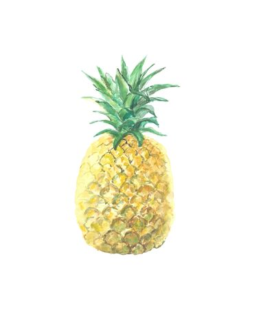 Single picture of pineapple isolated on white. High quality watercolor illustration