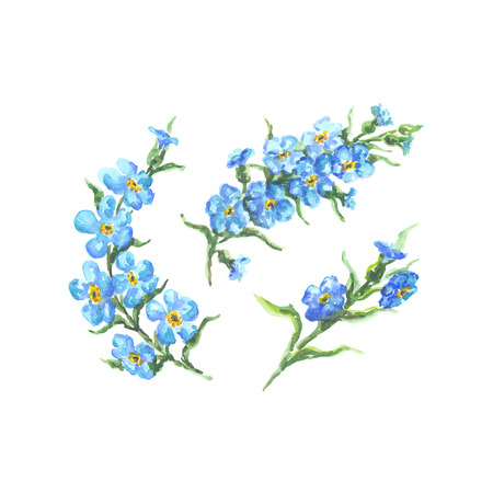 forget me not: Bright watercolor flower with leaf isolated on easy for cut white background Stock Photo